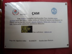 SAM_5194